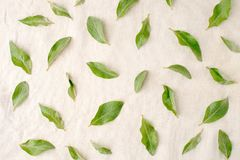 Flowers composition. Pattern made of green leaves on white tissue background. Flat lay, top view. Flowers composition, pattern made of green leaves on white Stock Photography