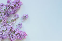 Flowers composition. Tender background. Beautiful fresh lilac flowers on gray background Stock Images