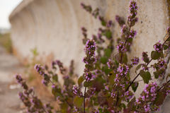 Flowers and concrete dam Royalty Free Stock Photos