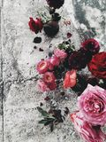 Flowers on concrete Flatlay Stock Images