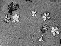 FLOWERS ON THE CONCRETE GROUND. BLACK AND WHITE PHOTO OF FLOWERS ON THE CONCRETE GROUND Stock Photos