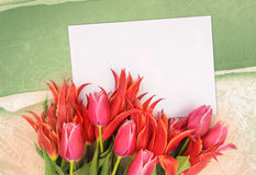 Flowers with congratulatory blank Stock Images