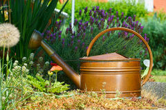 Flowers and Copper Watering can. Flowers, lavender and a old watering can in the home garden Royalty Free Stock Photography