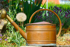 Flowers and Copper Watering can. Old copper watering can in the summer garden with lavender in the background Stock Photography