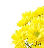 Flowers with copy space Royalty Free Stock Photography