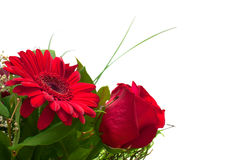Flowers copy space: red rose and gerbera Stock Photos