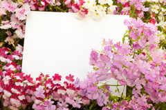 Flowers and Copyspace Stock Image