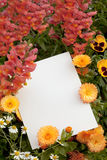 Flowers and Copyspace. Garden flowers with white copyspace for your greeting message Royalty Free Stock Images