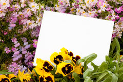 Flowers and Copyspace Royalty Free Stock Images