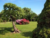 Flowers corne island in a garden Royalty Free Stock Photos