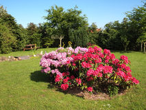 Flowers corne island in a garden Stock Photos