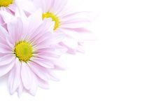 Flowers corner Royalty Free Stock Photography
