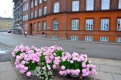 Flowers in a corner in Aarhus city Royalty Free Stock Photos