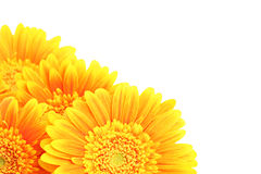 Flowers corner isolated Royalty Free Stock Images