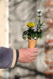 Flowers in cornet. Bouquet of spring flowers in an ice cream cornet, man gift for a woman Stock Photo
