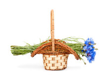 Flowers cornflower in the basket closeup Royalty Free Stock Photo