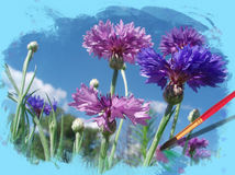 Flowers cornflowers Royalty Free Stock Photography