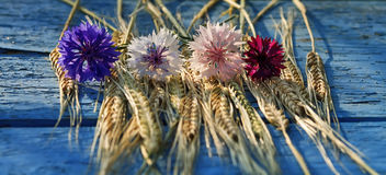 Flowers cornflowers and ears of wheat lying on a wooden table Royalty Free Stock Photo