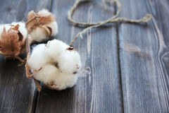 Flowers of cotton on wooden table. Large Flowers of cotton on wooden table Stock Photo