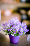 Flowers on counter Royalty Free Stock Photography