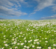 Flowers in countryside meadow. Scenic view of blooming flowers in countryside meadow under blue sky and cloudscape Stock Photos