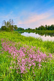 Flowers countryside spring landscape blue sky river Stock Images