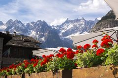 Flowers in Courmayeur with Alps in background royalty free stock image