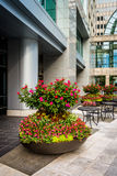 Flowers in a courtyard in downtown Charlotte, North Carolina. Royalty Free Stock Image