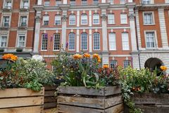 Flowers in Covent Garden. Flowers and an old architectural facade in Covent Garden Royalty Free Stock Photography