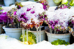 Flowers covered with snow and ice Stock Image