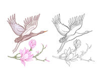 Flowers and crane. Set of colored sample and outline drawing. Royalty Free Stock Images