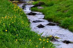 Flowers on a creek bed Stock Photos