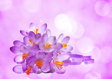 Flowers of crocus Royalty Free Stock Photos