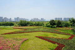 Flowers cultivated in pentacle pattern on lawn near modern city. Flowers cultivated in pentacle patterns on the lawn near modern city in sunny summer,Chengdu Stock Images
