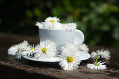 Flowers in a cup of coffee Royalty Free Stock Photos