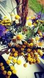 Flowers. Cuttedflowers wildflowers yellowflower fullframe details Royalty Free Stock Photos