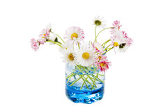 Flowers of a daisy in a glass Stock Photography