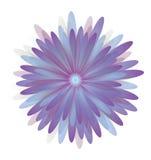 Flowers Daisy of purple Royalty Free Stock Photo