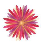 Flowers Daisy of Red. Flowers Daisy of  and Illustrations Royalty Free Stock Image
