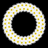 Flowers daisy shape circle frame Royalty Free Stock Images