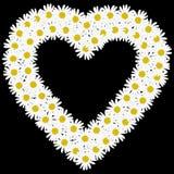 Flowers daisy shape hear Stock Photography