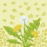Flowers dandelion and abstract pattern Royalty Free Stock Image