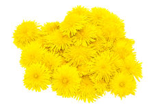 Flowers dandelions. Large fragment of flowers on a white background stock images