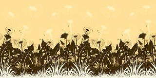 Flowers Dandelions Silhouettes Seamless Royalty Free Stock Image