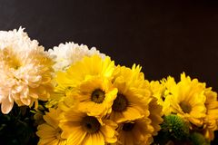 Flowers on a dark background Royalty Free Stock Photo