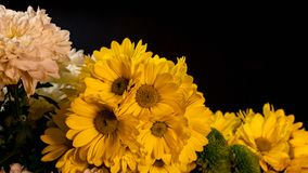 Flowers on a dark background Stock Image