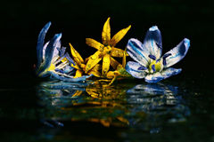 flowers on dark backgroune Stock Photo
