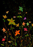 Flowers in dark backround Royalty Free Stock Images