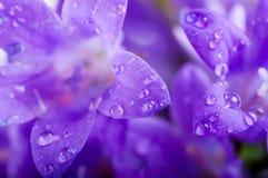 Flowers, dark blue hand bells Stock Photo