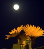 Flowers in the darkness Stock Images